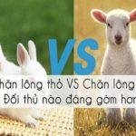 So sánh chăn lông cừu và chăn lông thỏ