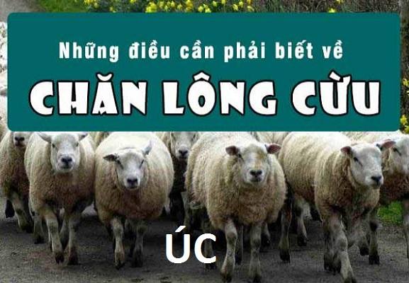 Chăn Lông Cừu Úc
