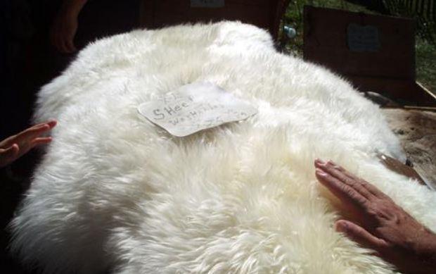 Lưu ý khi dùng chăn lông cừu tự nhiên